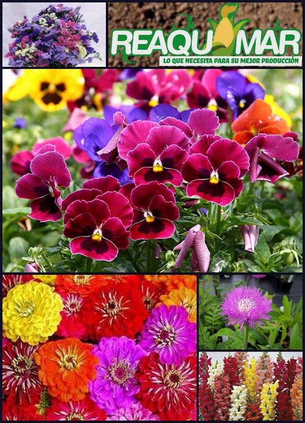 Pack 5 tipos de semillas de flores
