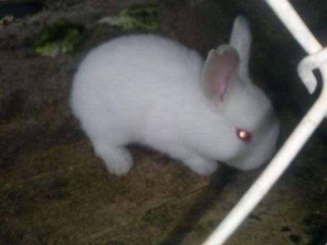 Vendo hermosos conejos gazapos