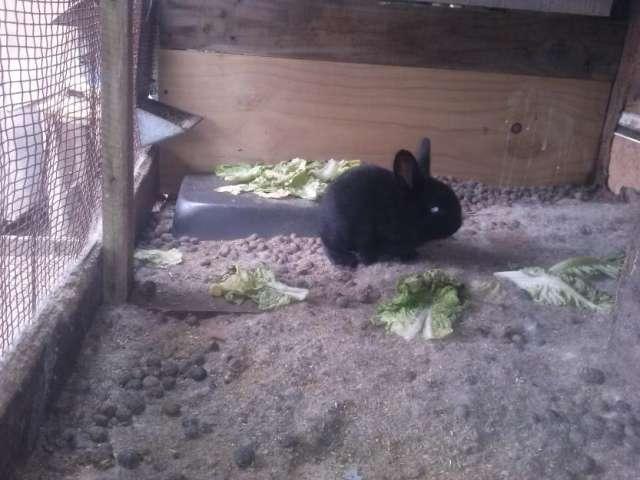 Fotos de Vendo hermosos conejos gazapos 3