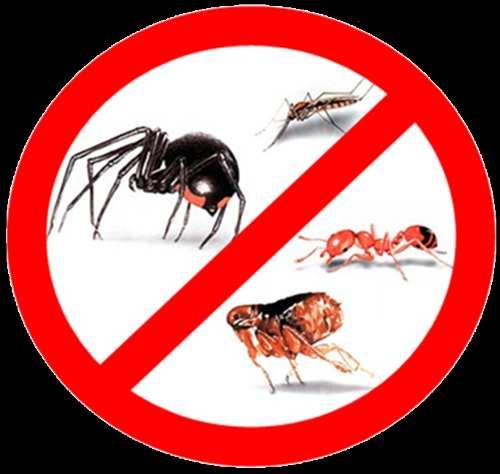 Eliminacion ratones termitas algarrobo tunquen